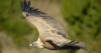 Avistamiento de buitres y aves en Andalucia
